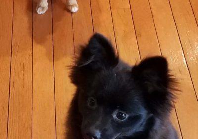 #puppytraining #housebreaking #douglasville