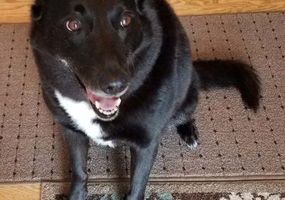 #seniordog #dogtraining #Collegeville
