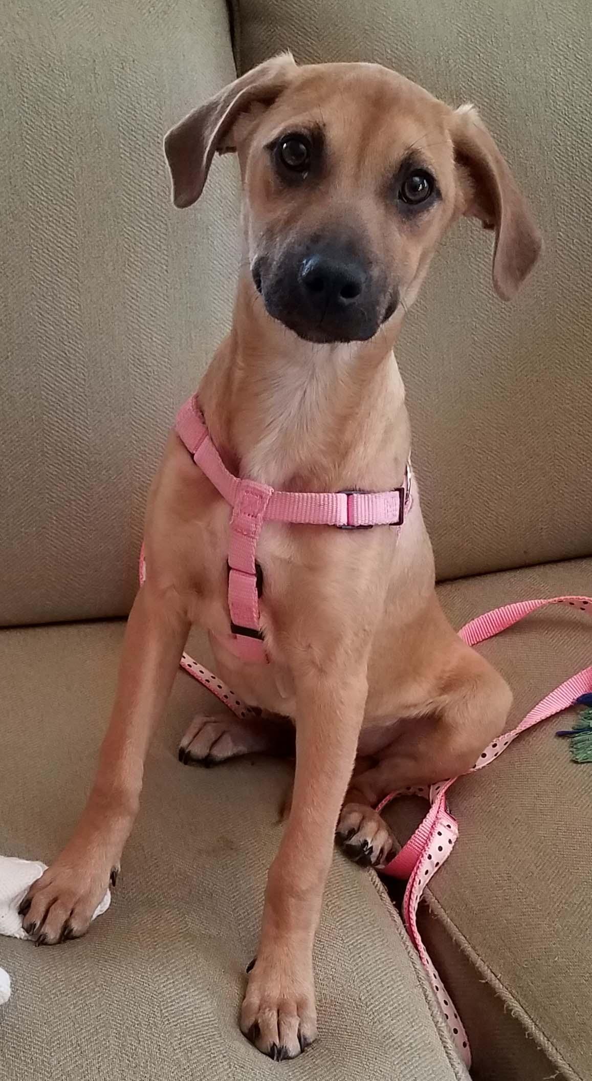 #sadie #blackmouthcur #timid #puppy