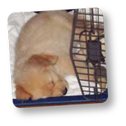 #labpuppy #crate