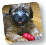 #puppywithkong
