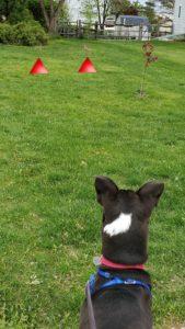 watching bunnies on walk