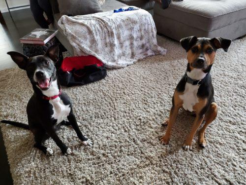 Foster to Adopt 2 week update