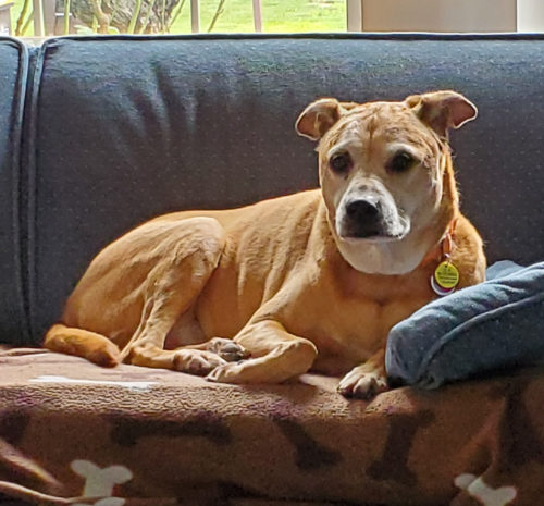 Senior dog – lots of love to still give