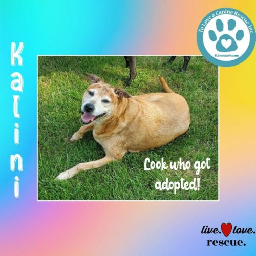 Kalini gets ADOPTED!