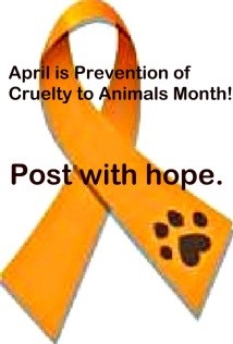 What Each of Us Can Do To Prevent Cruelty to Animals